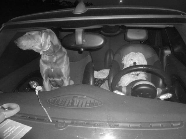 Hunde Foto: andreas und Luba & Goehte – kennen sie diese Hunde Fahrschule
