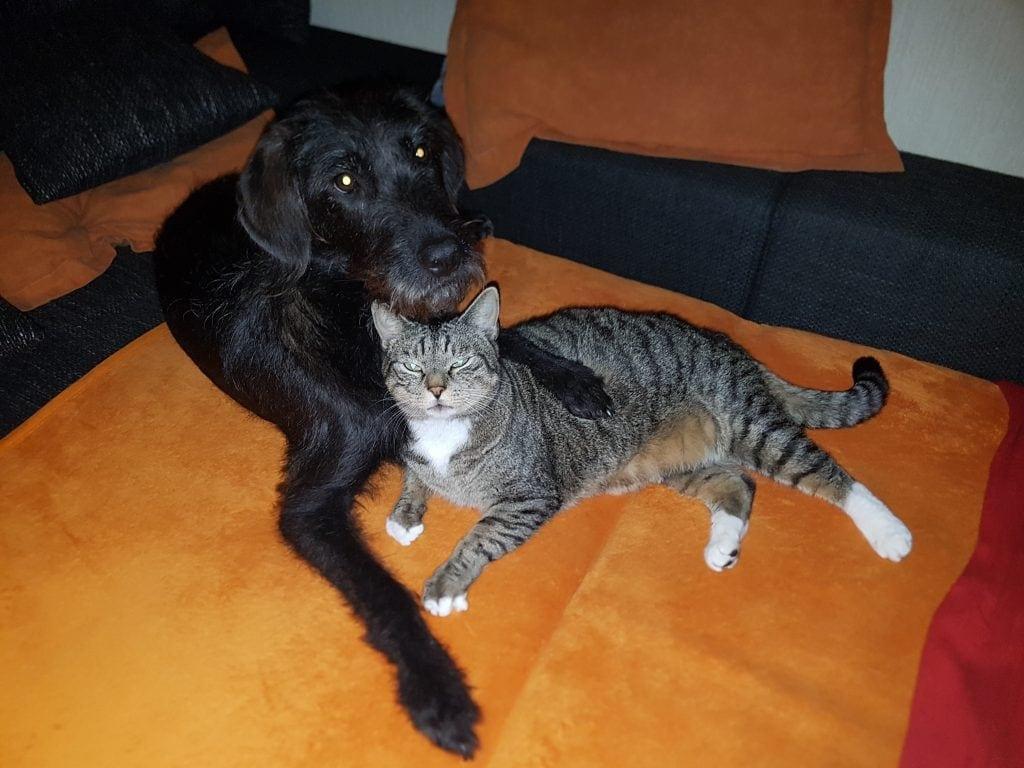 Hunde Foto: Nadine und Fussel - Meine Katze