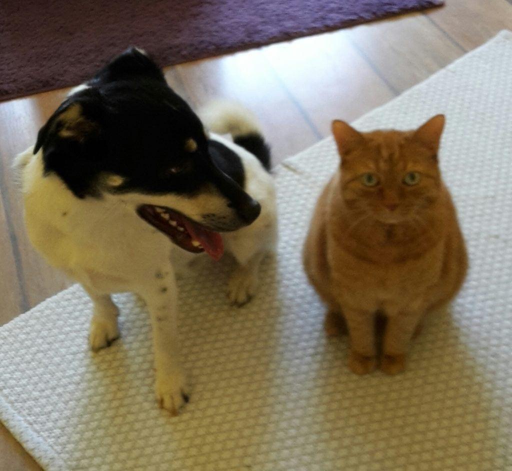 Hunde Foto: Petra und Benny - Benny mit Freund Fritz