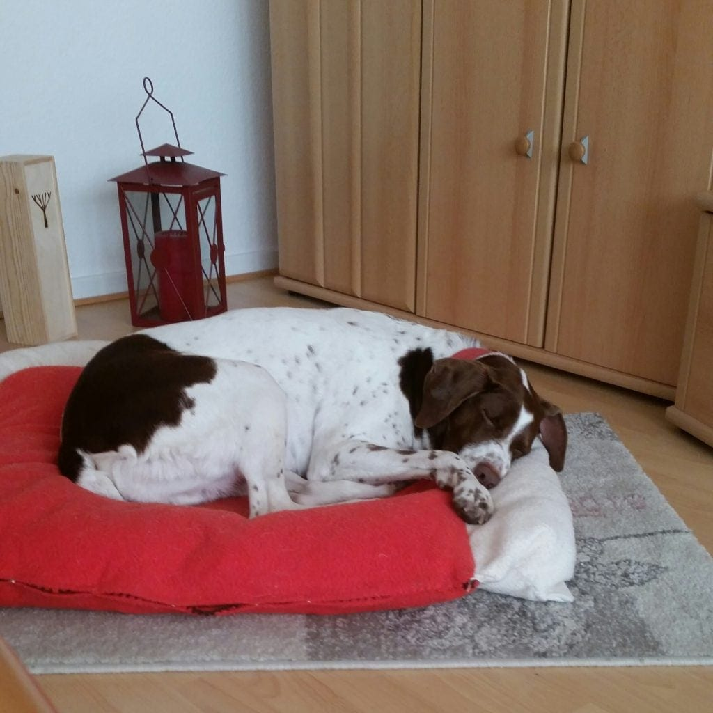 Hunde Foto: Brigitte und Paco - Erst Schwimmen 😅dann todmüde ins Bett
