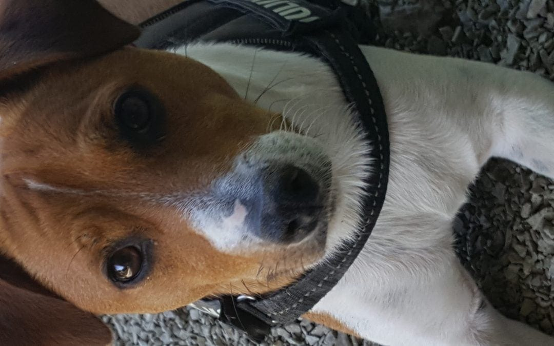 Hunde Foto: Catherine und Zlatan – Will mein Leckerli