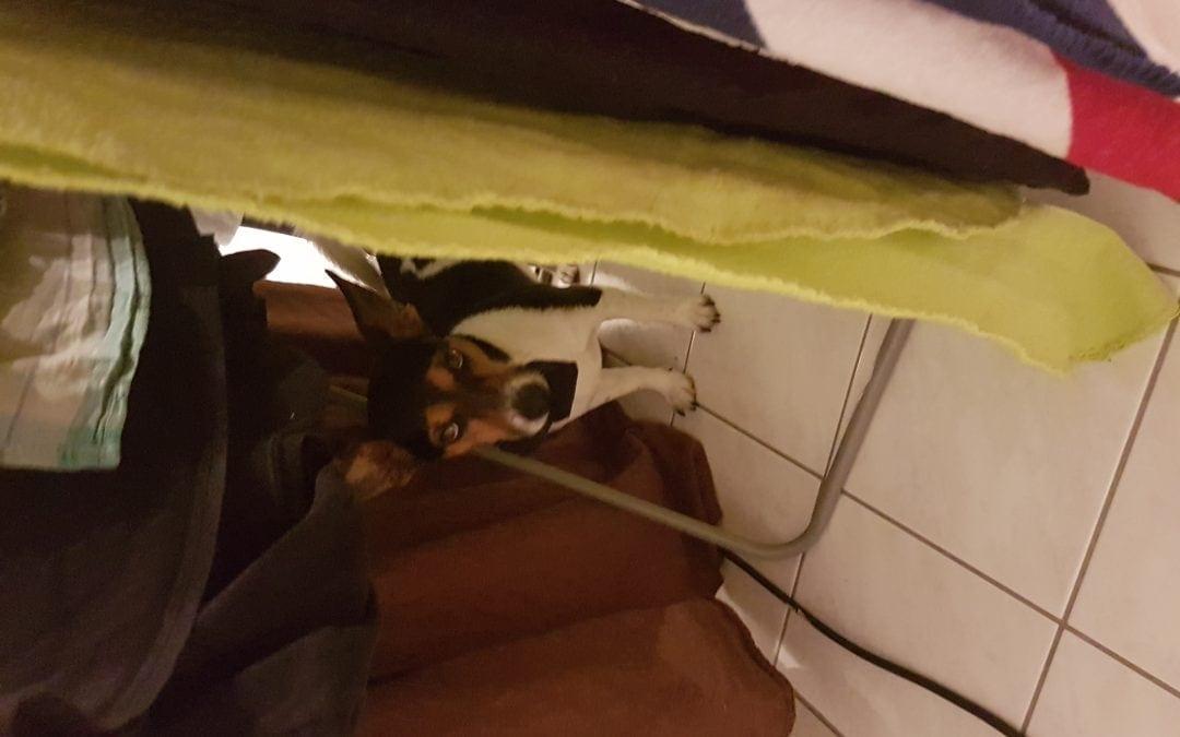 Hunde Foto: Ulrike und Linus – Sockendieb Gute Nacht