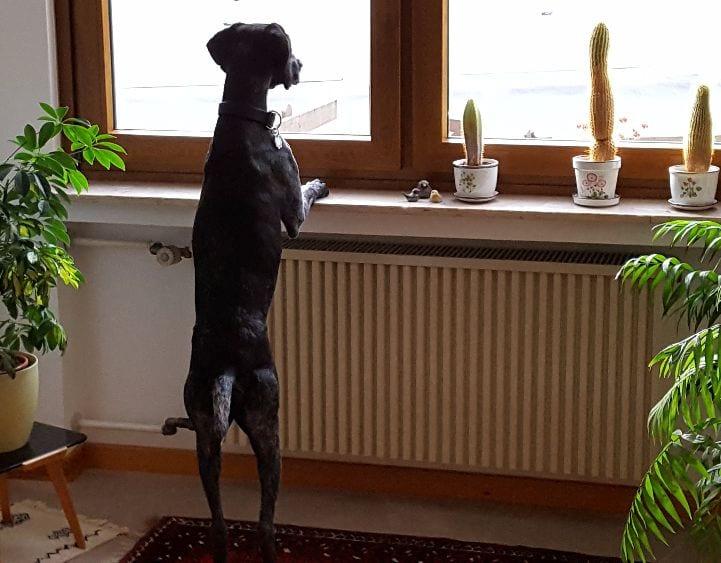 Hunde Foto: Marion und Stella – Wo bleiben sie denn?