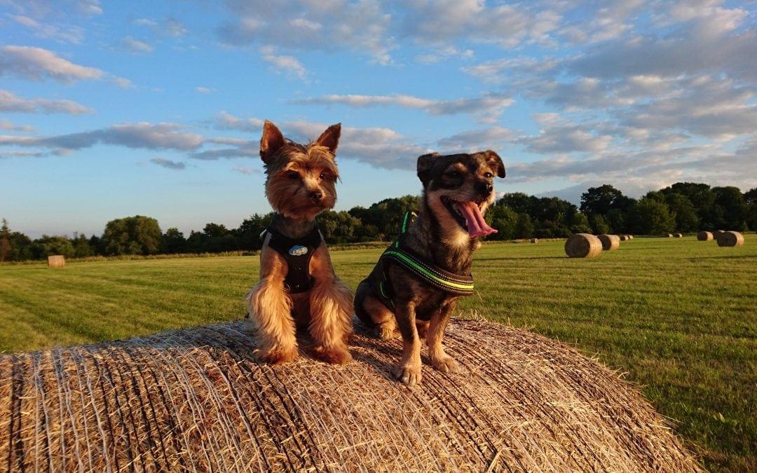 Hunde Foto: Tanja und Shiva, Chucky – Meine Freunde