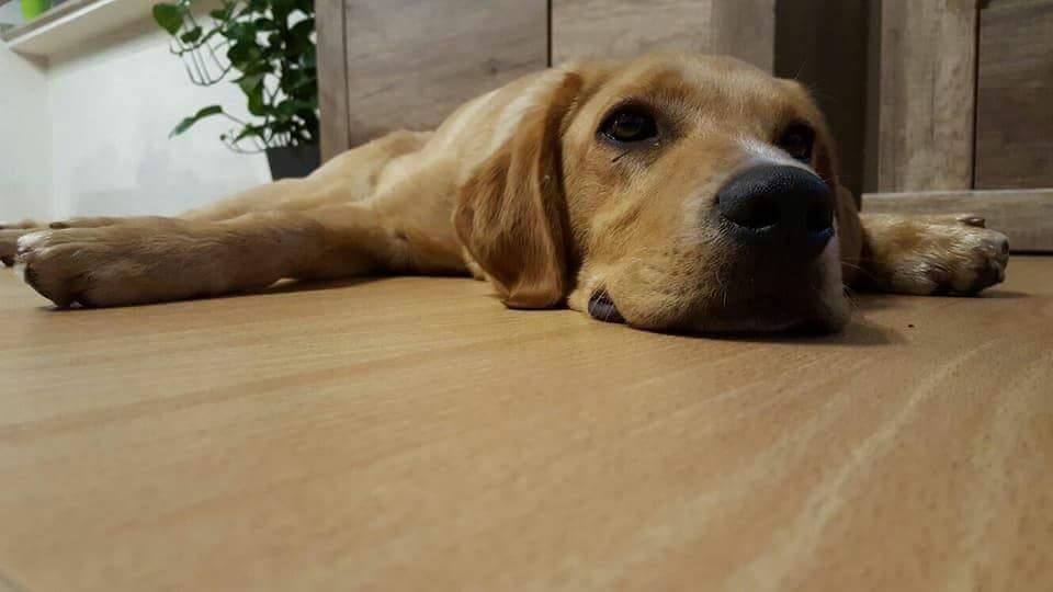 Hunde Foto: Jens und Max - Chillen