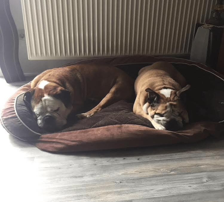 Hunde Foto: Enrico und Spirit und Nelly – Rentner