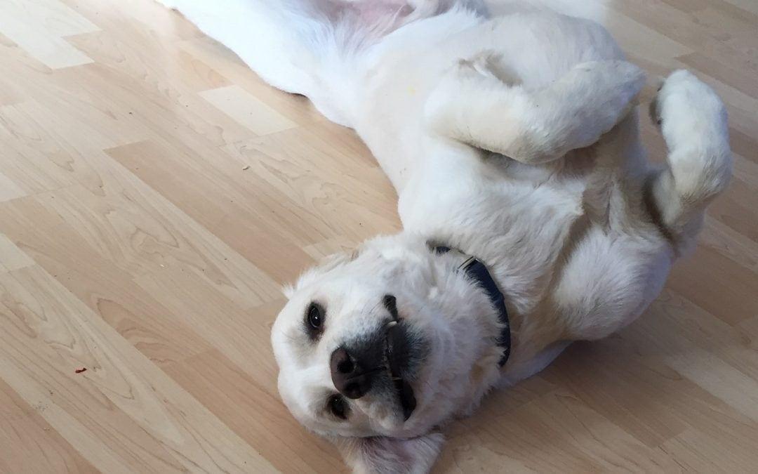 Hunde Foto: Vera und Milow – Tiefenentspannung