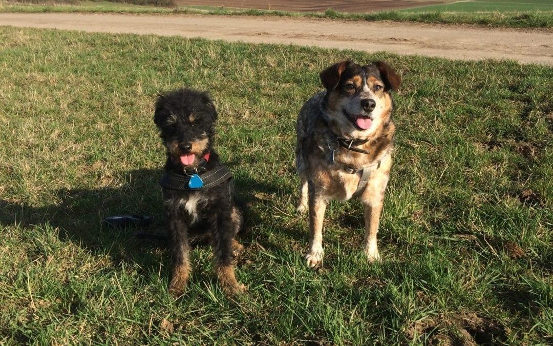 Hunde Foto: Susanne und Filou und Flash – Meine Besten