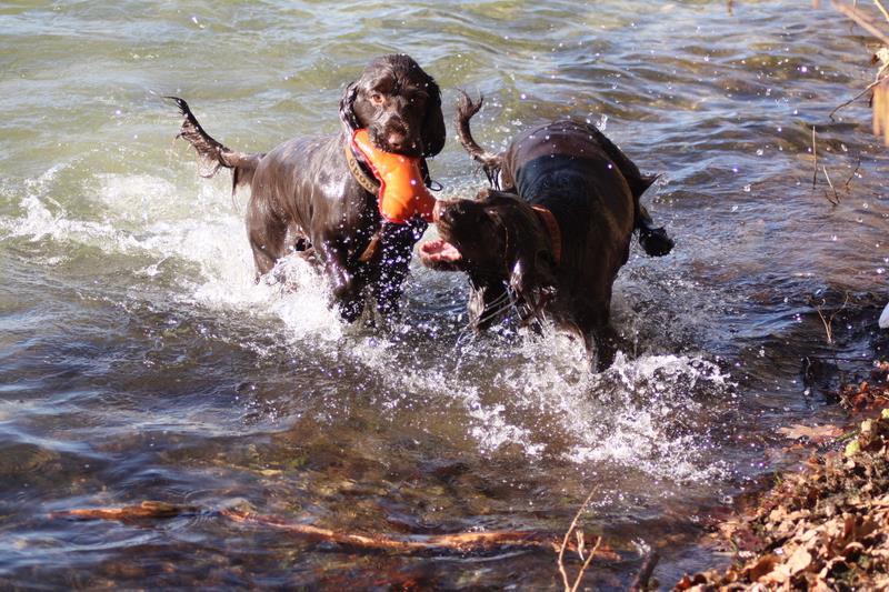 Hunde Foto: Helga und Frodo & Ishtar - WASSER marsch