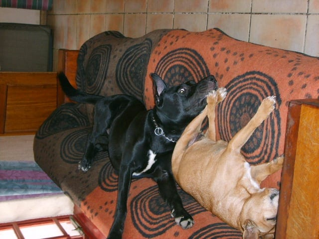 Hunde Foto: marietta und neround candy - zwei glueckliche hunde