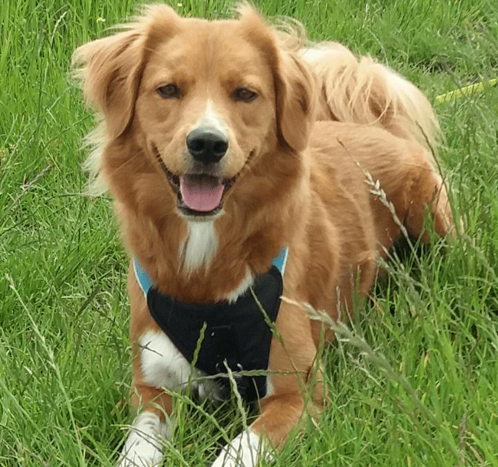 Hunde Foto: Nicole und Sam – Sonnenscheinhund