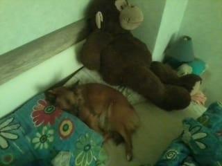 Hunde Foto: Ralf und Luna - Ich und mein Affe