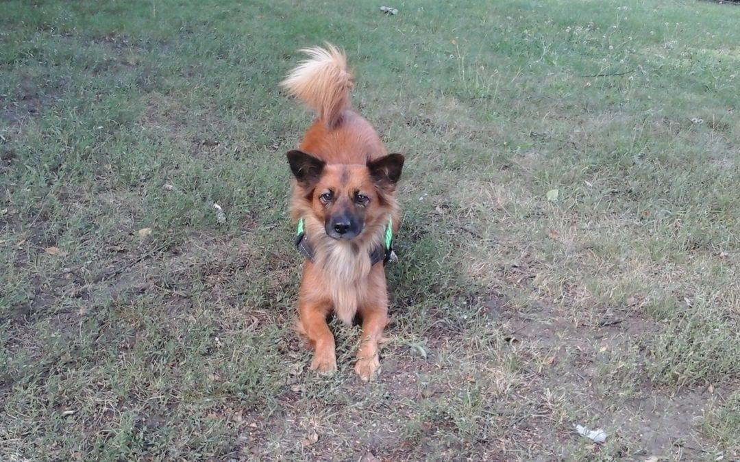 Hunde Foto: Ralf und Luna – Spiel mit mir!
