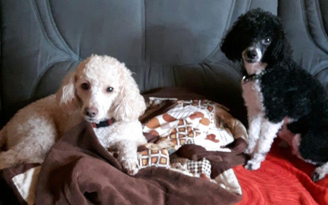 Hunde Foto: Ellen und Kimi und Caramio – Zwei beim Fototermin.