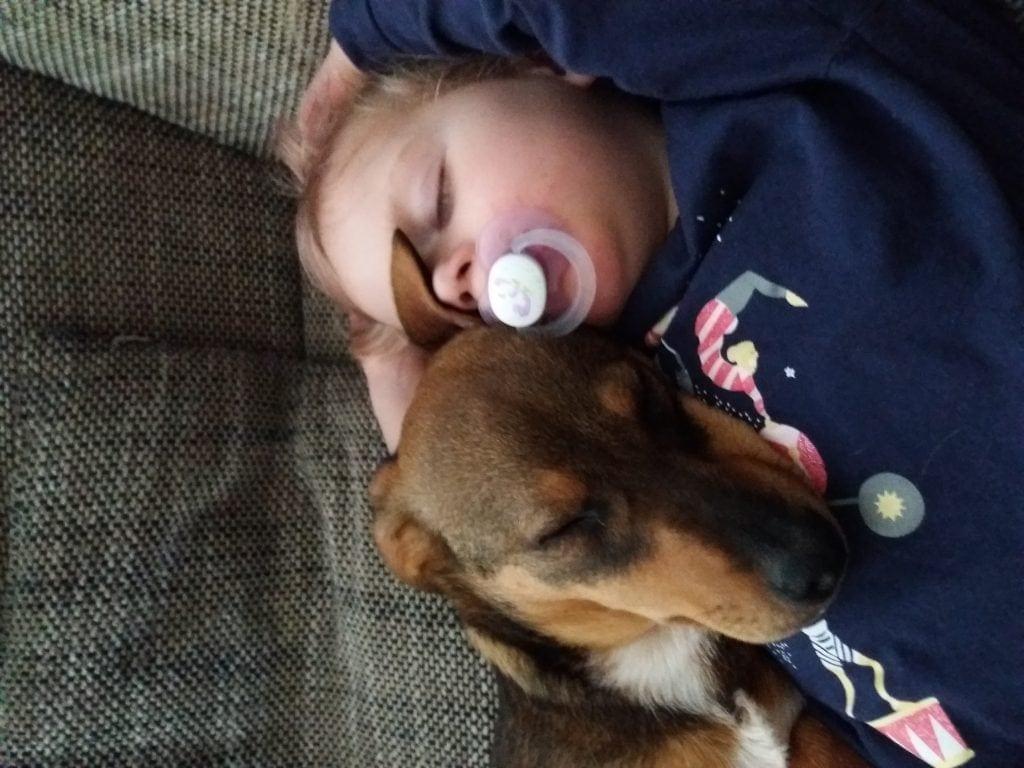 Hunde Foto: Julia und Cooper - ... chillen  .... und ihr so 😂
