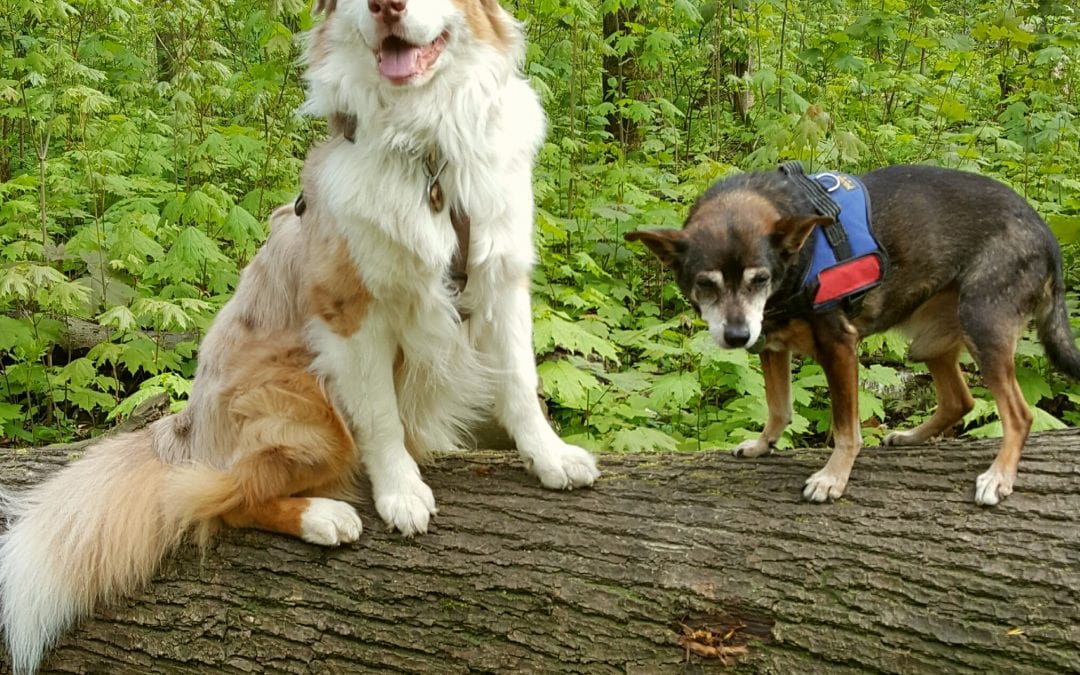 Hunde Foto: Silvia und Yuma und Teddy – Ungleiche Freunde
