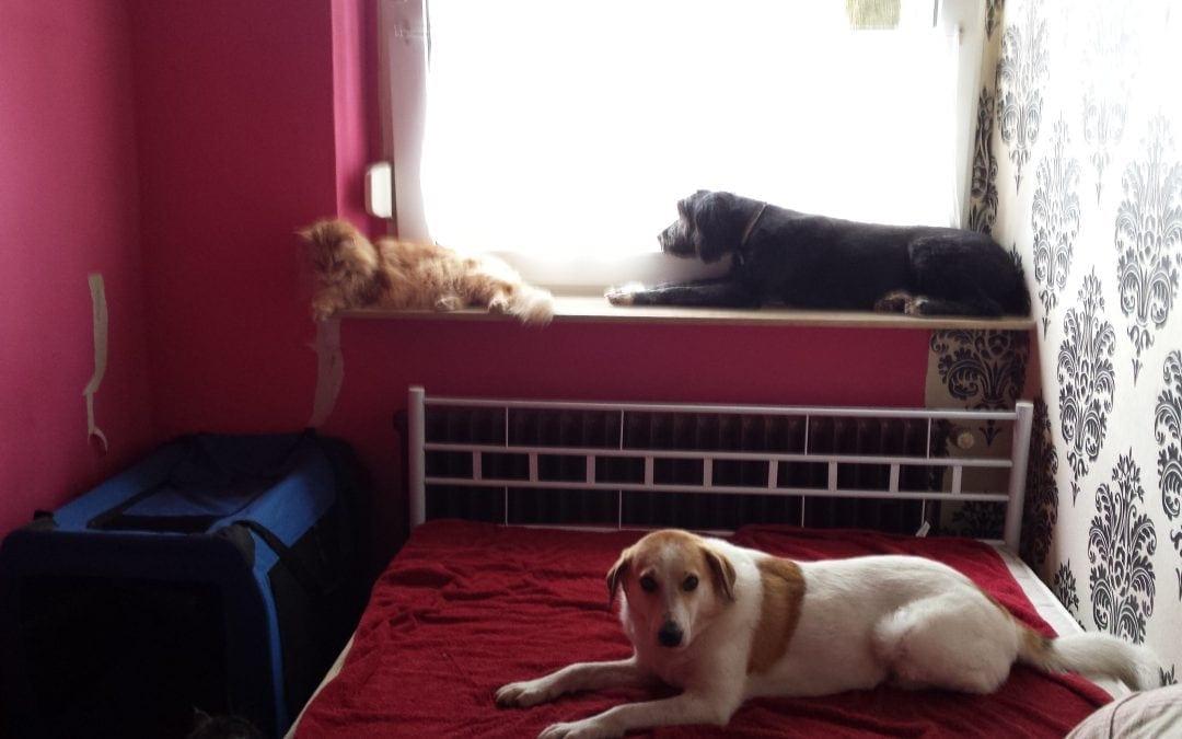 Hunde Foto: Martina und Zita – Mal schauen was draußen so los ist5