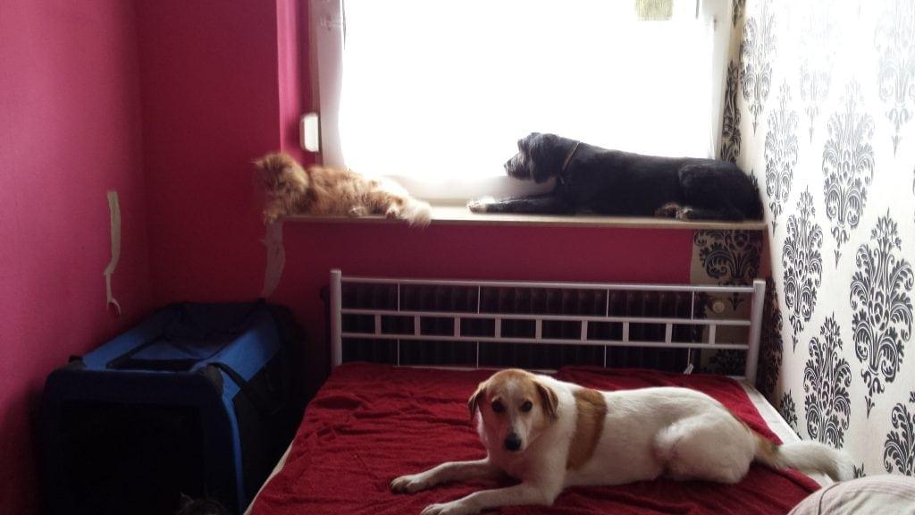 Hunde Foto: Martina und Zita Zottel - Mal schauen was draußen so los ist