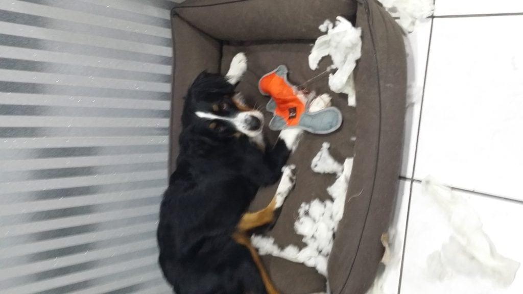Hunde Foto: Jeannette und Bonny - Kein Spielzeug ist sicher vor Bonny