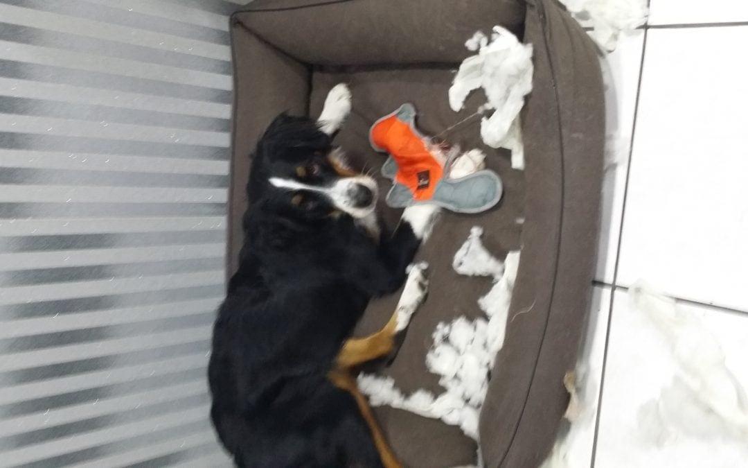 Hunde Foto: Jeannette und Bonny – Kein Spielzeug ist sicher vor Bonny