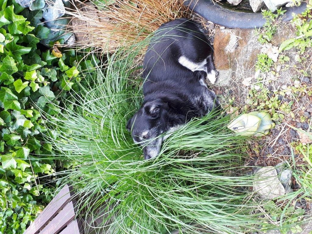 Hunde Foto: Monika und Runn - Sonnenbad
