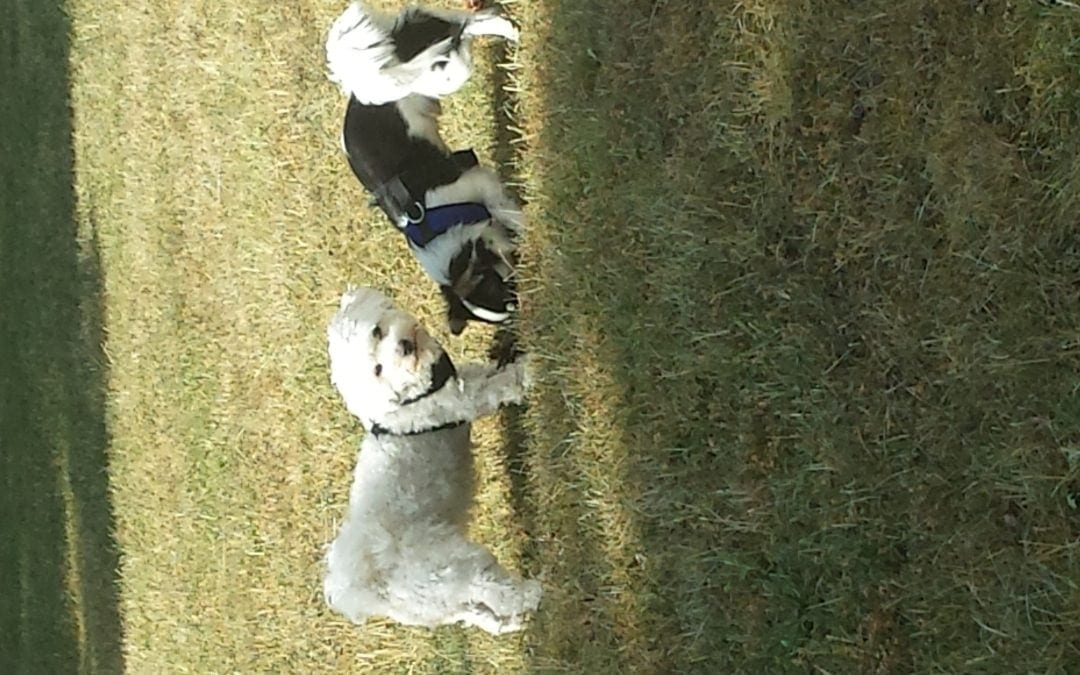 Hunde Foto: Petra und Paula und Samu – Paula und Samu