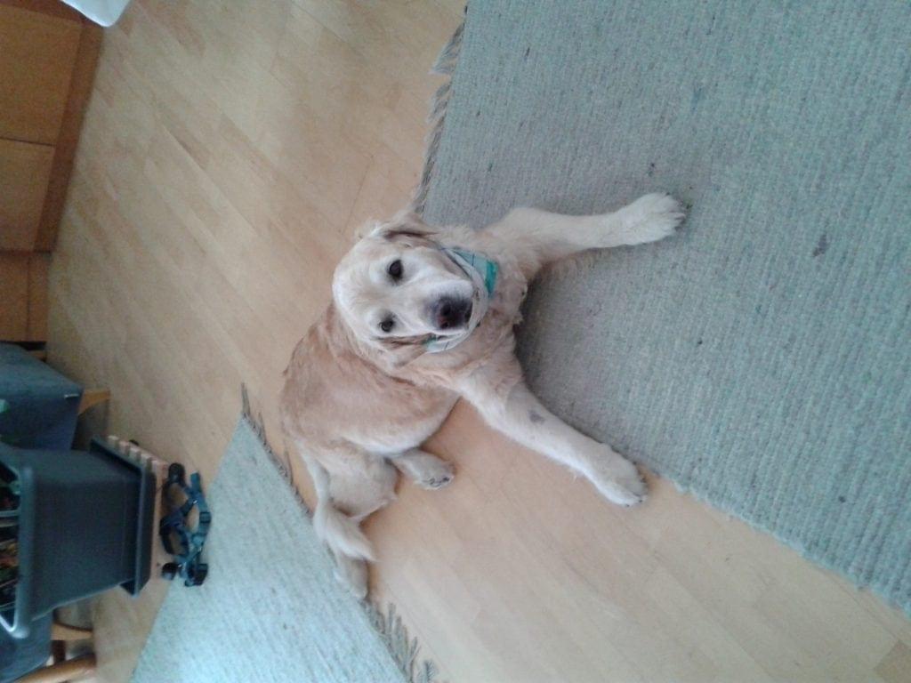 Hunde Foto: Petra und Kitty von Heinrichsbrünnl - Meine Prinzessin mit fast 12 Jahre!