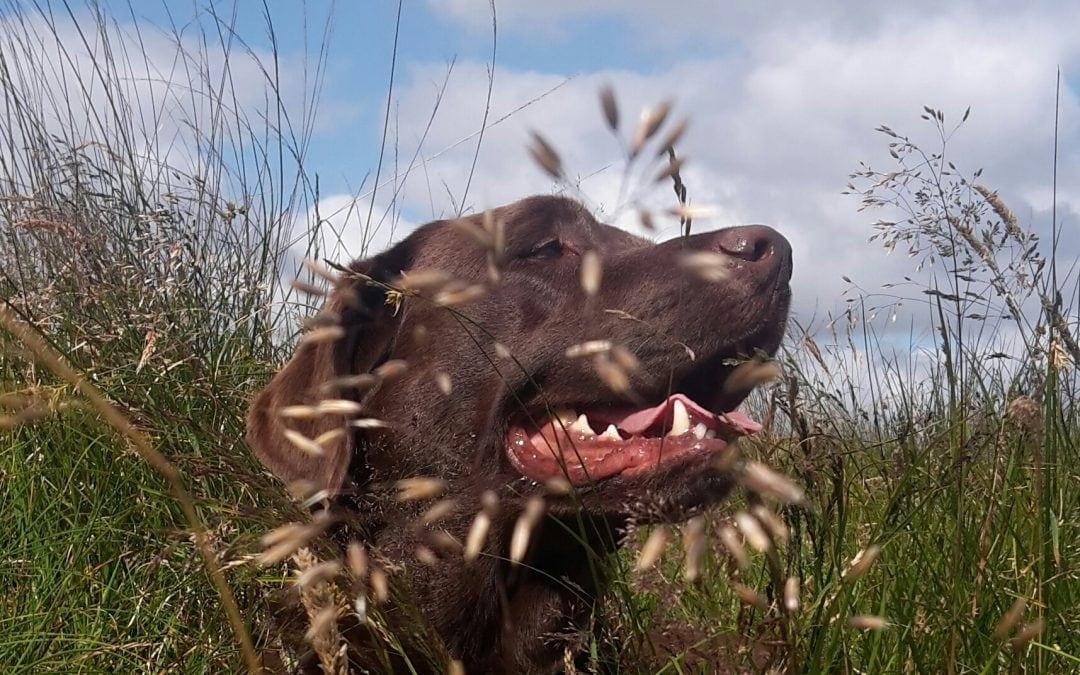 Hunde Foto: Anne und Carlos – Sommer pur