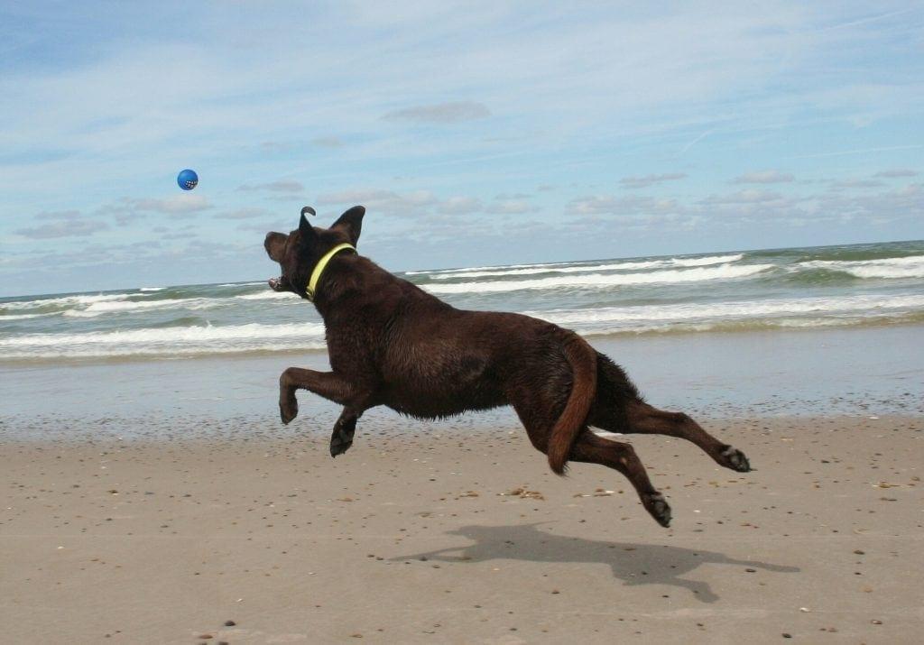 Hunde Foto: Anne und Carlos - Spaß