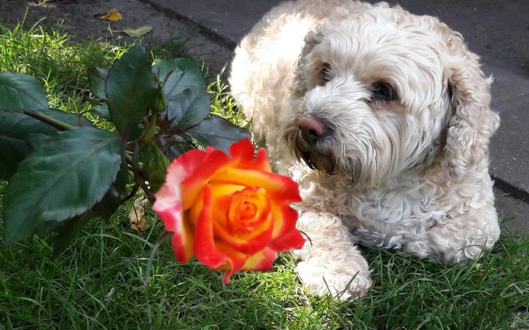Hunde Foto: Karina und Bienchen – Man Frauchen, muss das jetzt sein.