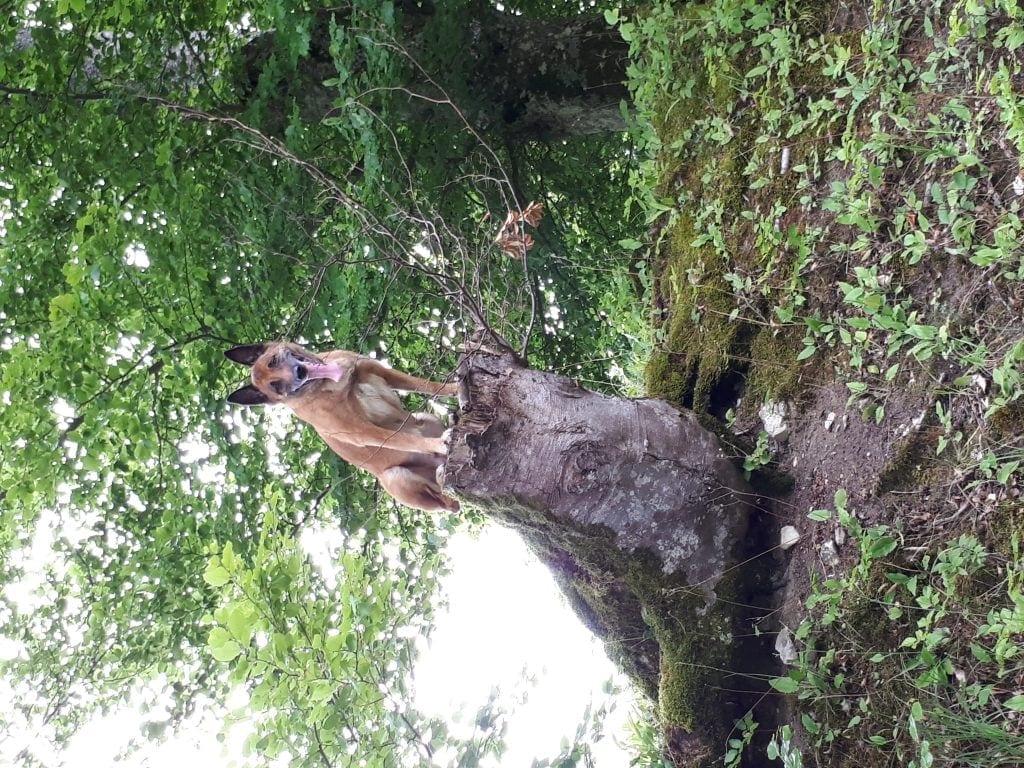 Hunde Foto: Nadine und Honey - Ausgepowert