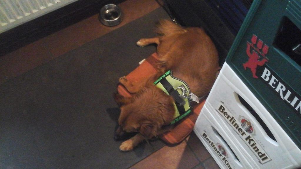 Hunde Foto: Ralf und Luna - Bin fertig, harter Arbeitstag