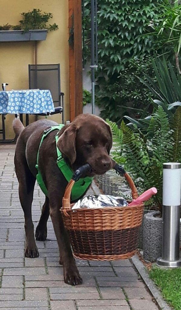 Hunde Foto: Anne und Carlos - Überraschungsgast