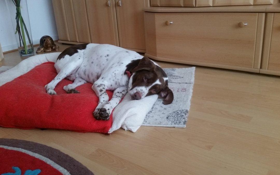 Hunde Foto: Brigitte und Paco – So müde.