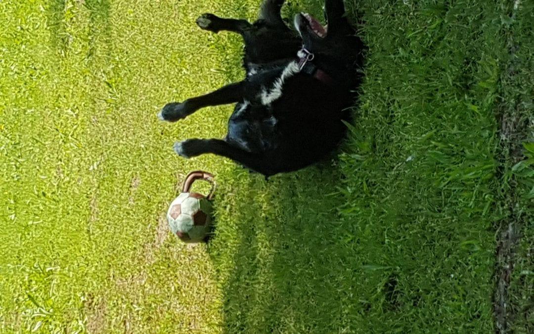 Hunde Foto: Bianca und Bakira – Sie freute sich des Lebens!
