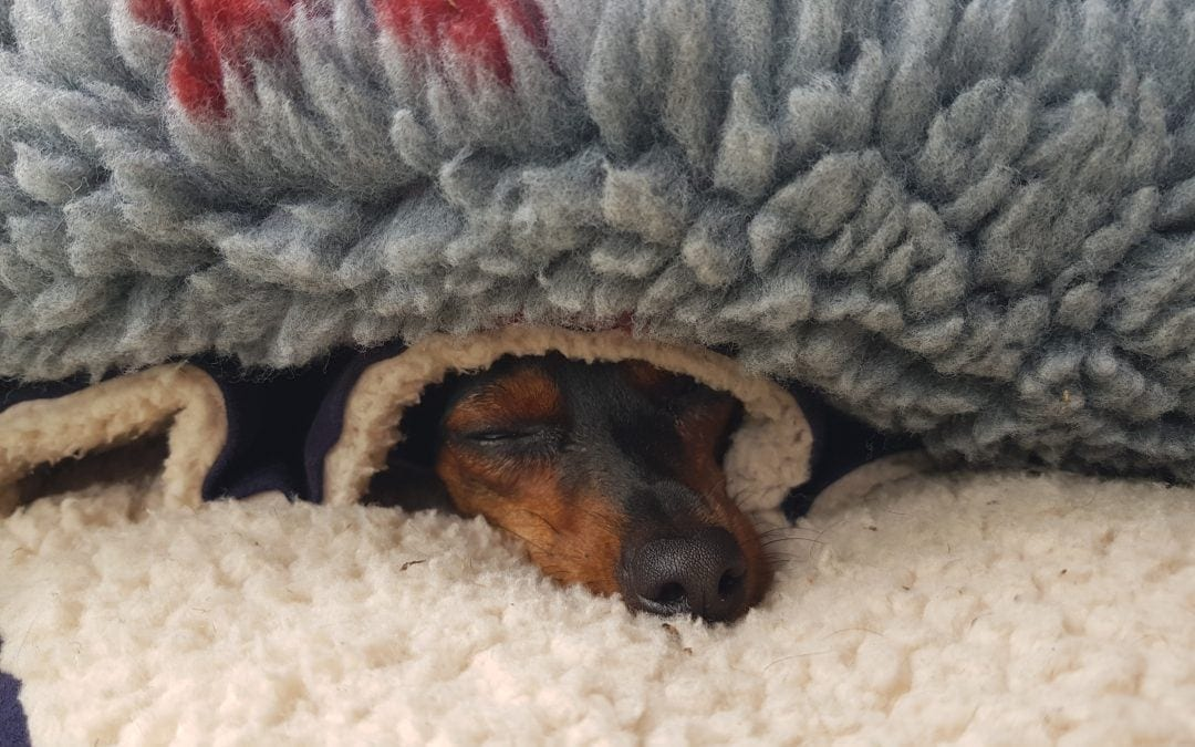 Hunde Foto: Thomas und Gino – Herr