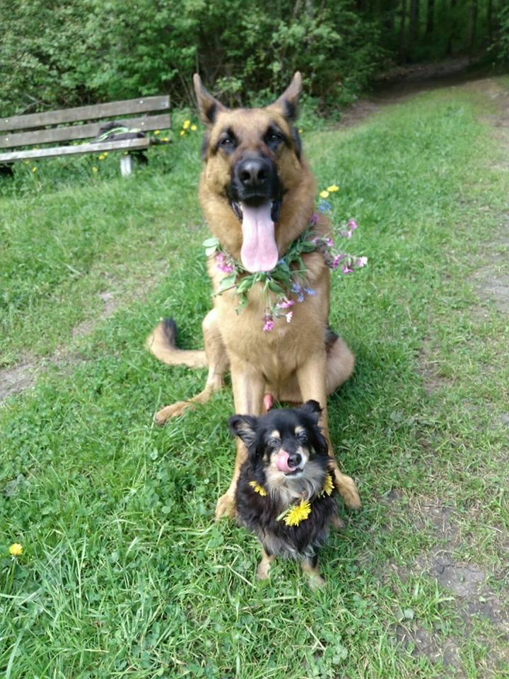 Hunde Foto: Tanja und Janko & Lia - Janko mein Beschützer und grosser Bruder