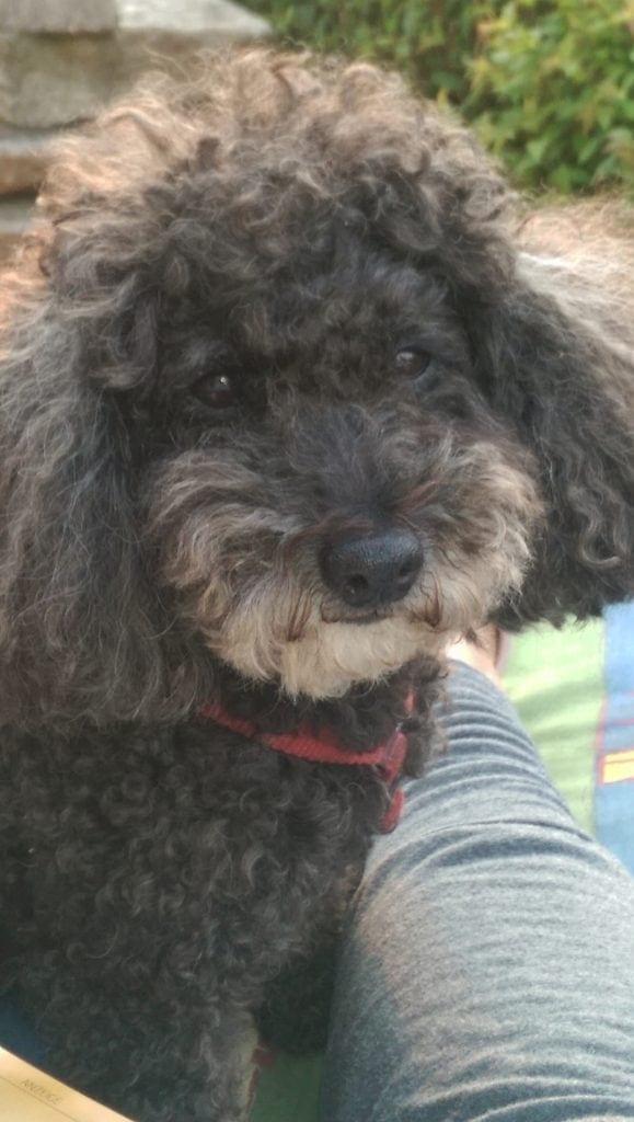 Hunde Foto: Susanne und Blacky - Ich hab dich lieb