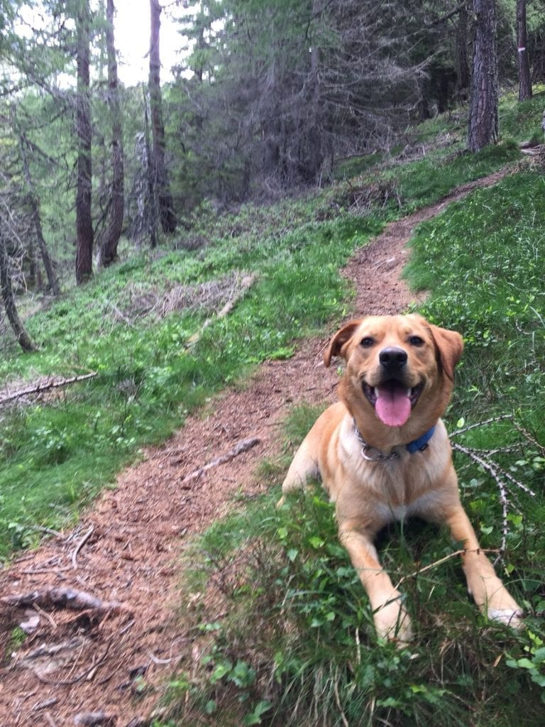 Hunde Foto: Mirko und Nero - Waldspatziergang