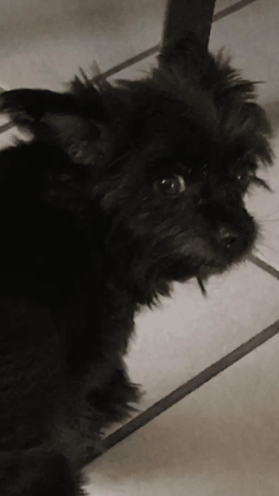 Hunde Foto: Birgit und Socke - Ich hab jetzt keine Zeit, ich muss weg!