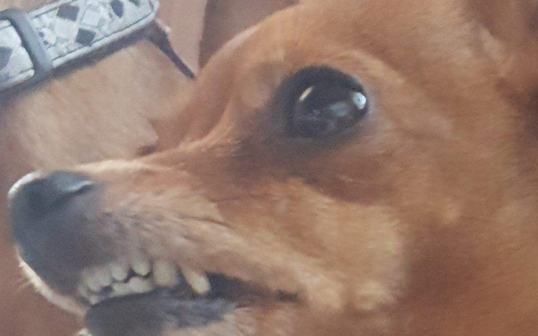 Hunde Foto: Susanne und Schi Schi – Isch lache