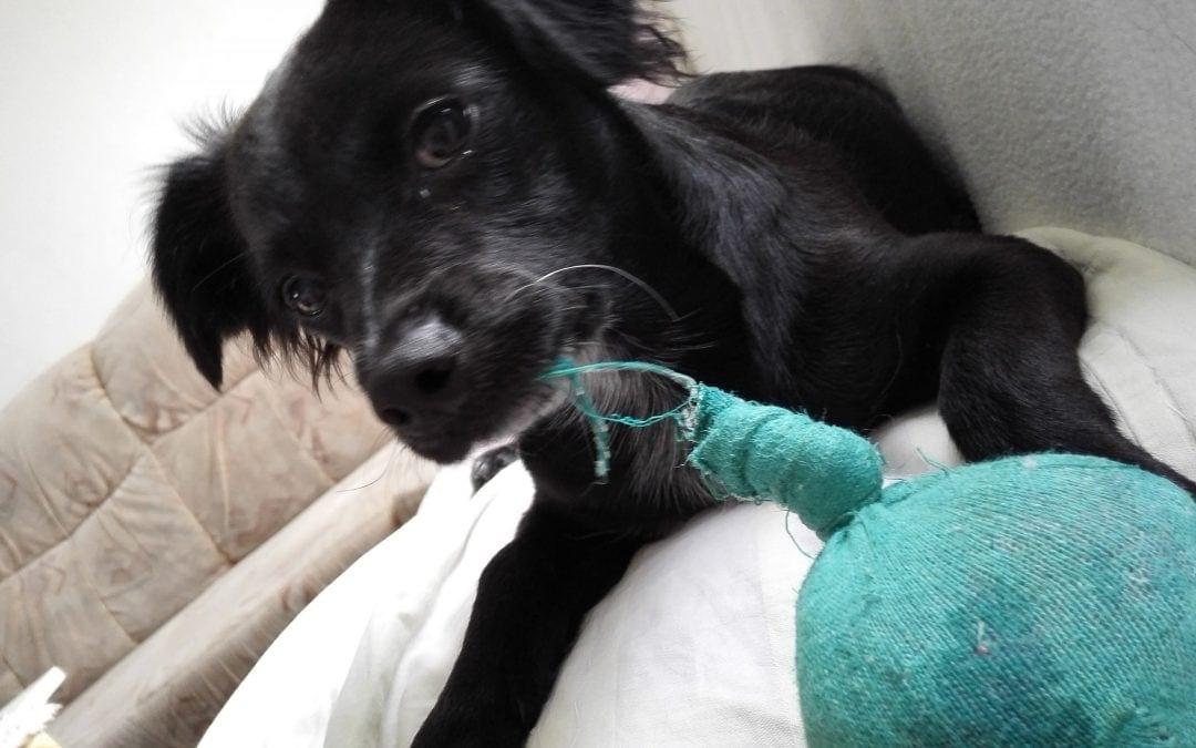 Hunde Foto: Heidi und Ricky – Mein erstes balli