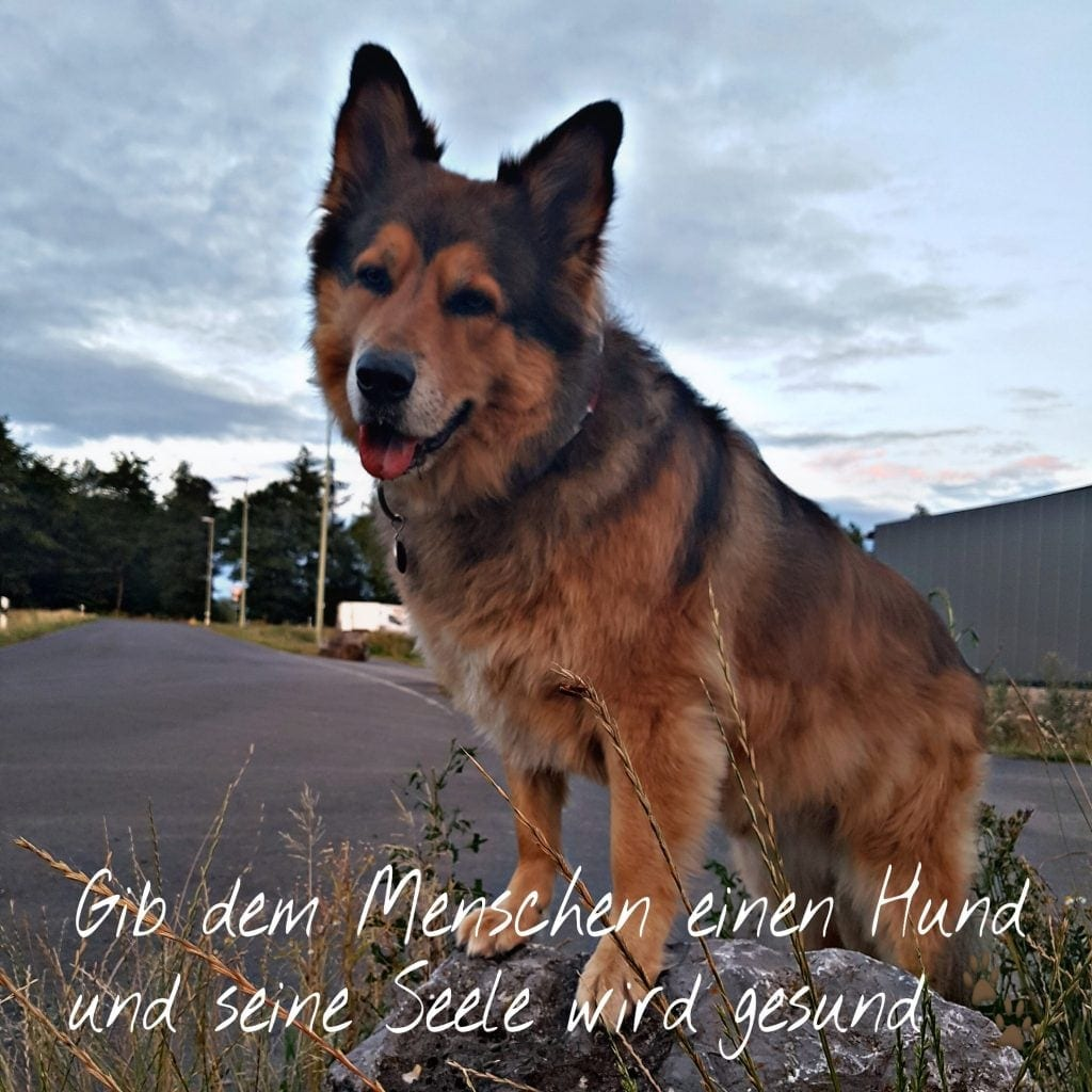 Hunde Foto: Micha und Mogli - Einfach mal so 🐶