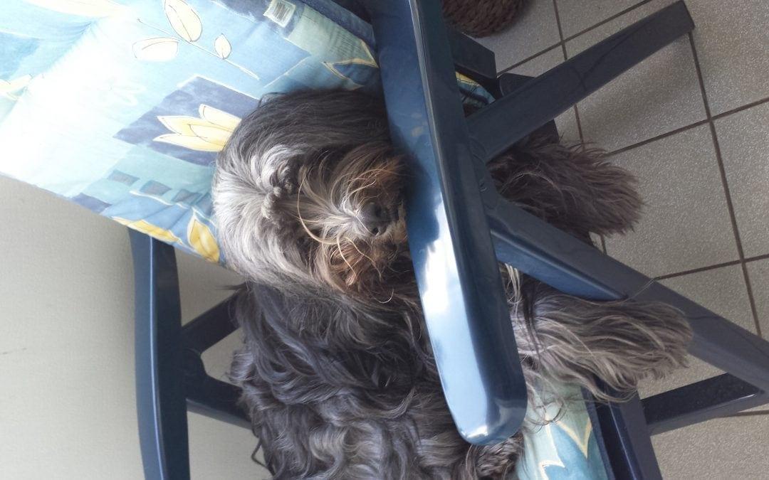 Hunde Foto: Sonja und Rambo – chillen auf dem Balkon