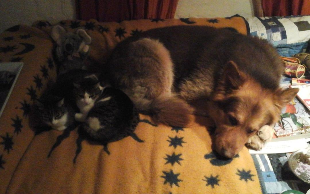 Hunde Foto: Marion und Navajo – Mein hübscher schatz