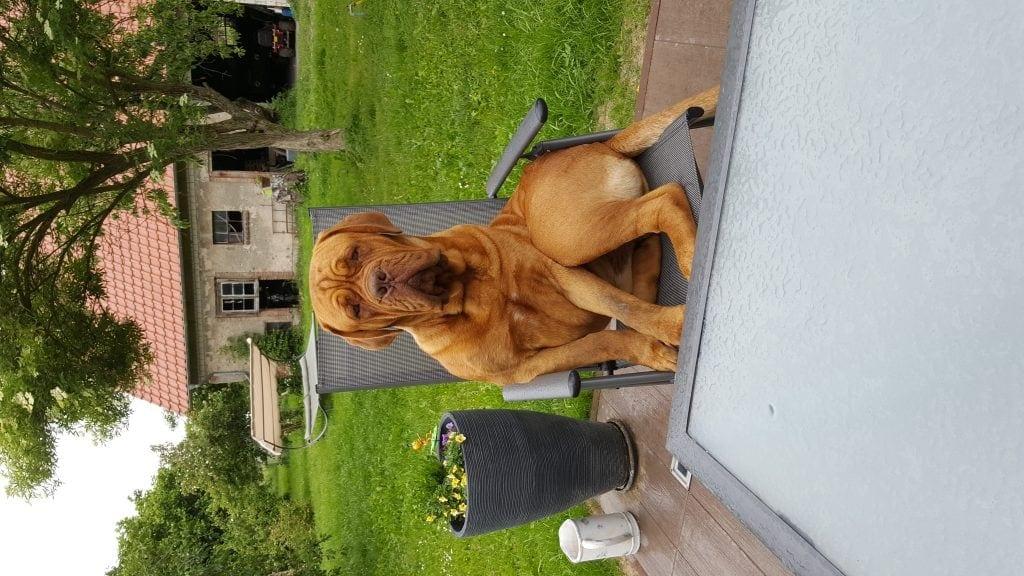 Hunde Foto: Antje und Baloo - Erstmal ne Rund chillen