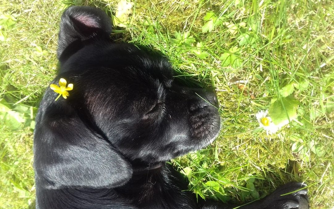 Hunde Foto: Carina und Smölle – Love