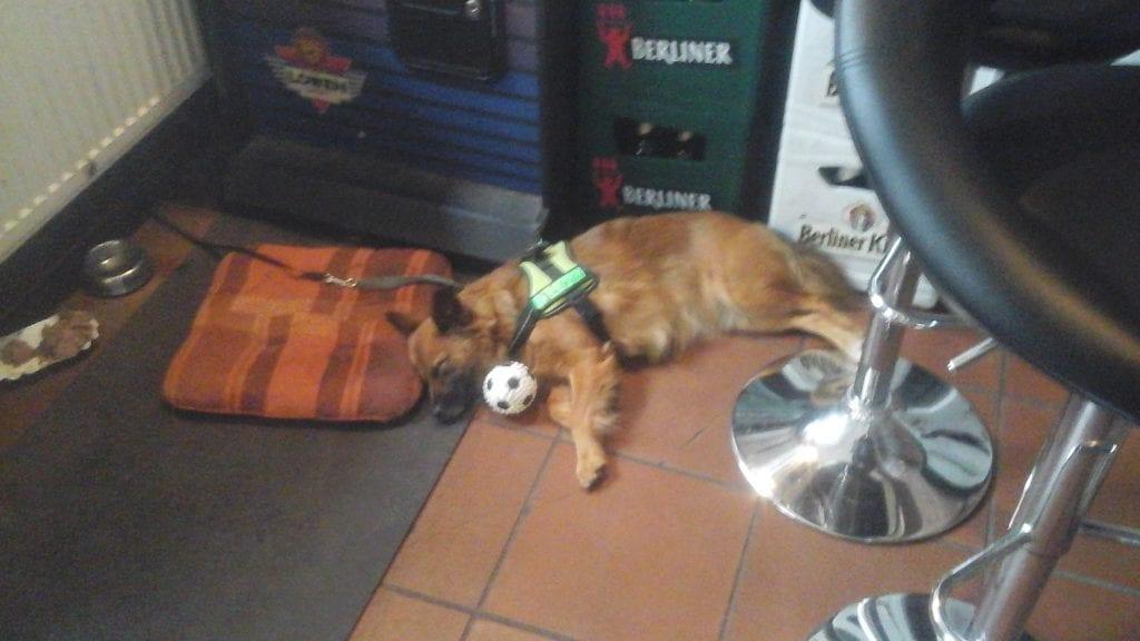 Hunde Foto: Ralf und Luna - Fertig mit spielen, auf Arbeit