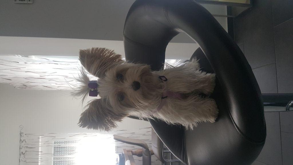 Hunde Foto: Marion und Lilly - Grazer Schönheit