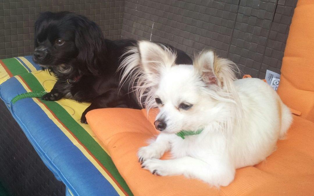 Hunde Foto: Sabine und Lady und Chili – uns geht's gut